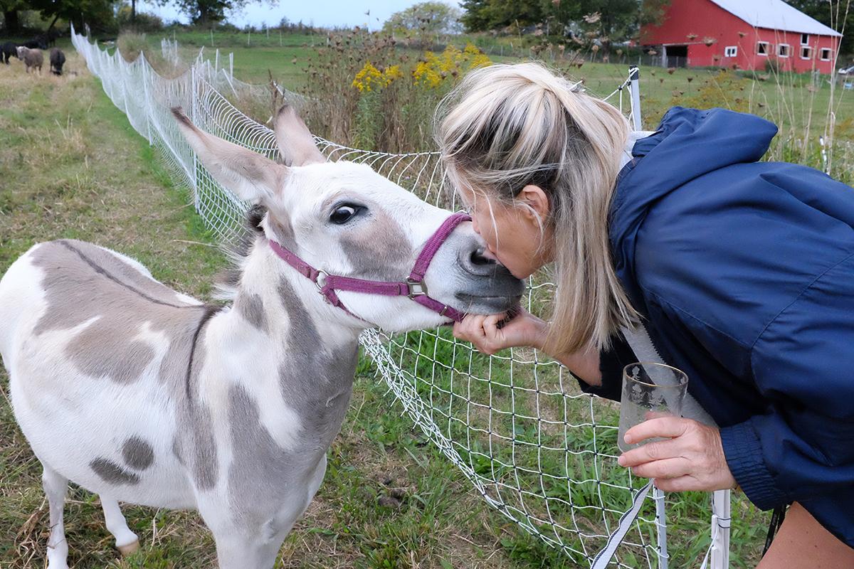Home - Artemis Farm Rescue, Inc